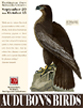 Poster image of Audubon's Birds, showing a bird.