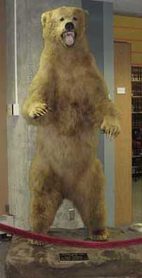 Sundance, Owen Library's Bear